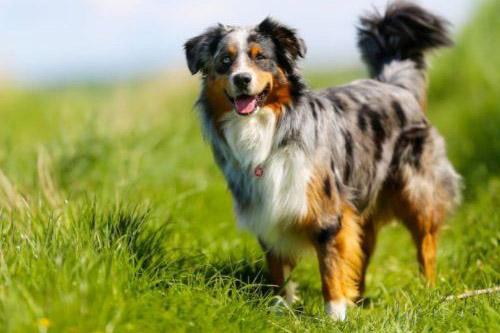 dog-con-cho