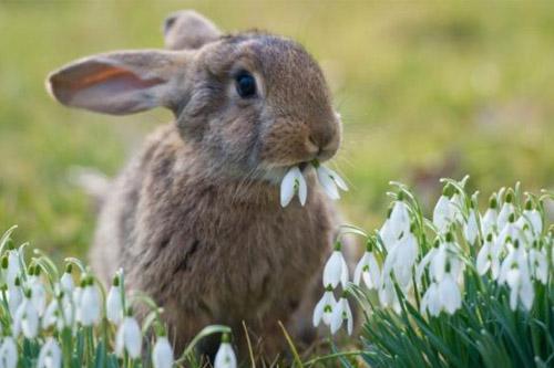 bunny-con-tho
