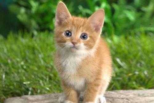 cat-con-meo