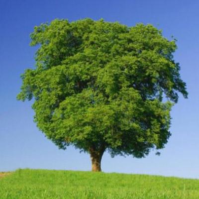 tree-cai-cay