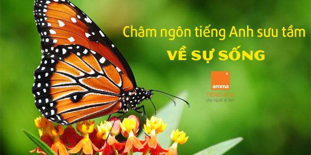 Tham-thia-voi-nhung-cau-cham-ngon-tieng-anh-suu-tam-ve-su-song