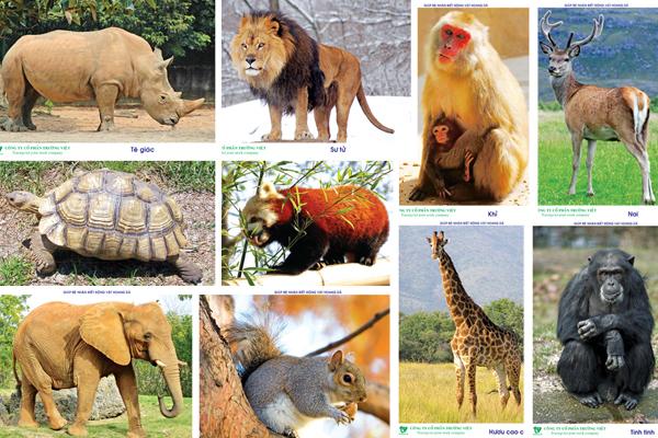 Từ vựng tiếng Anh về các loại động vật