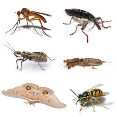 insect-sau-bo