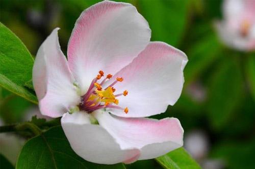 flower-hoa