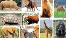 các loại động vật